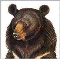 Bear_1_2
