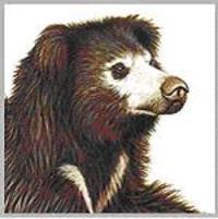 Bear_6