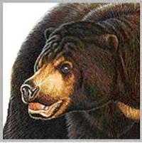 Bear_8